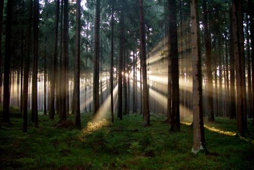 Entwicklung der Vorstellungen von Licht