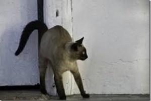 scared cat_thumb[1]