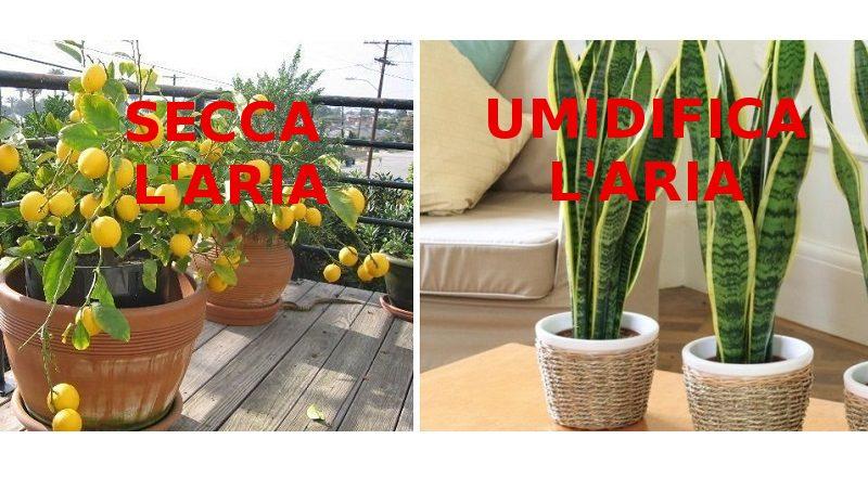 Piante Da Appartamento Che Assorbono L Umidita.10 Tipi Di Piante Per Creare Un Microclima Perfetto In Casa
