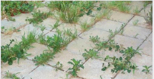 Come eliminare le erbacce per sempre e in modo naturale