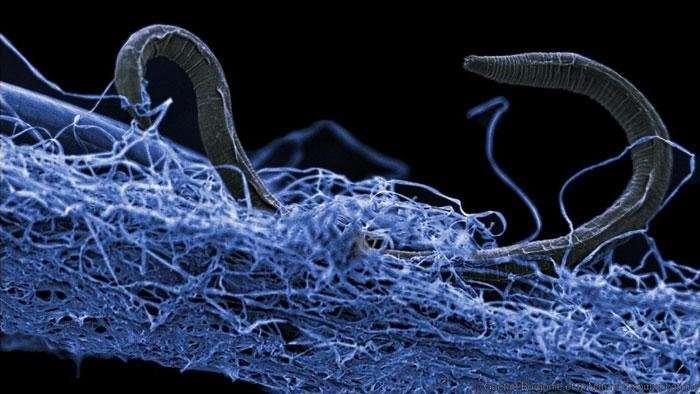 Scienziati scoprono un ecosistema colossale brulicante di vita al di sotto della superficie terrestre