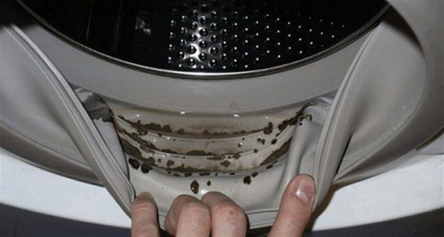 Muffa nelle lavatrice? I pericolosi funghi che si formano nella guarnizione vanno eliminati: ecco come