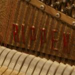 rippen_sheherezade_09