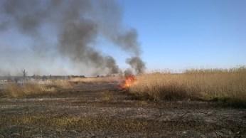 incendio li foggi (24)