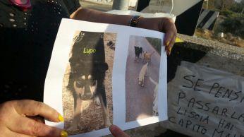 Cani uccisi a Gallipoli - Il ricordo dei volontari (2)