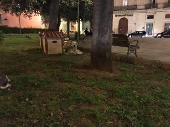 Le cuccette di piazza Sant'Antonio (2)
