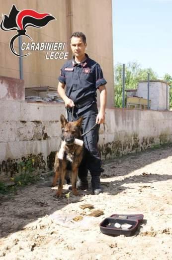 Cutrofiano, Carabinieri in azione con il cane Zilo
