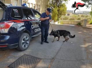 Carabinieri nucleo cinofili