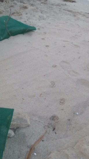 Le tracce verso il mare