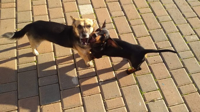 I cani smarriti: Marley (a destra) e Ariel (a sinistra)