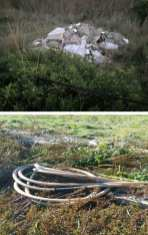 Degrado Parco naturale Ugento 4