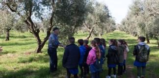 L'agricoltore Angelo Paiano nell'uliveto con i ragazzi, in una precedente attività