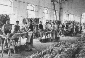 Le tabacchine in una foto d'epoca