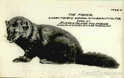 RPPC Ausable Chasm,NY The Fisher A Very Fierce Animal With Beautiful Fur,als