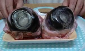 Occhi di tonno