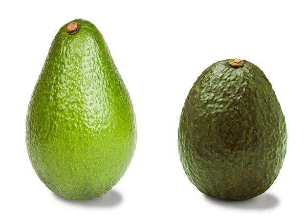 Varieta di Avocado