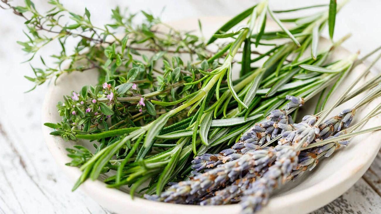 Come Seccare Le Piante erbe e piante aromatiche vol 1 - piccole ricette magazine
