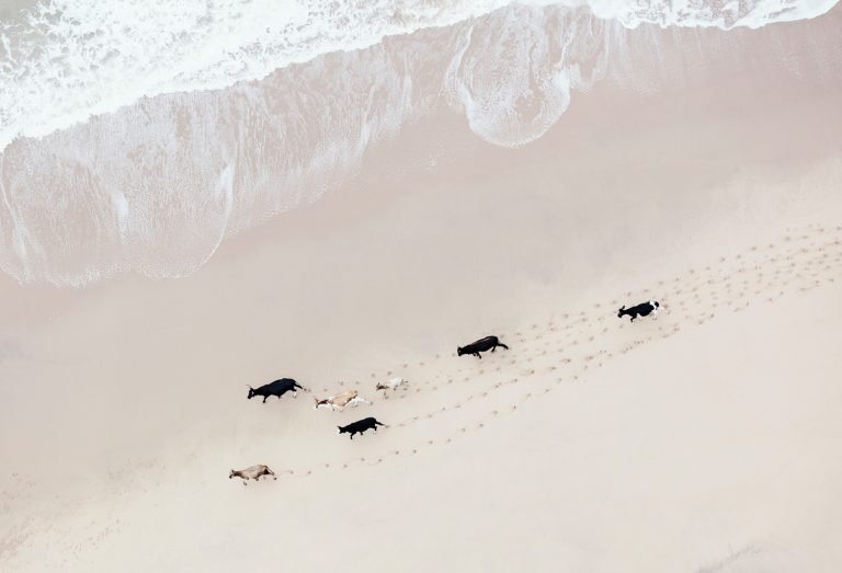 South Africa from above photograph of livestock running on the beach