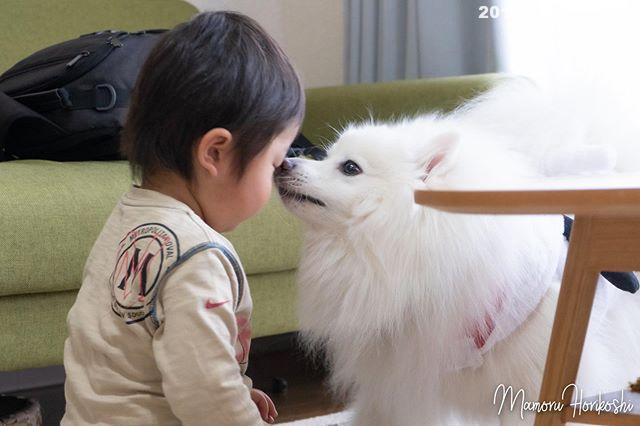 チュッ#日本スピッツ⠀#日本犬⠀#スピッツ⠀#犬バカ⠀#犬好きさんと繋がりたい ⠀#犬なしでは生きていけません会 ⠀#犬と暮らす ⠀#犬好きと繋がりたい