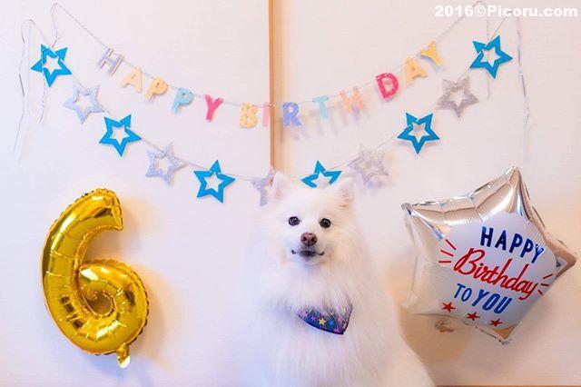 6歳になりました。#オフ会撮影いたします。⠀#日本スピッツ⠀#日本犬⠀#スピッツ⠀#犬バカ⠀#犬好きさんと繋がりたい ⠀#犬なしでは生きていけません会 ⠀#犬と暮らす ⠀#犬好きと繋がりたい