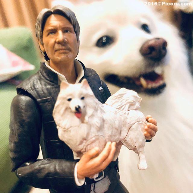 スピッツを拾った可愛いので飼うことにしました。^_^#ハリソンフォード ⠀#日本スピッツ⠀#日本犬⠀#スピッツ⠀#犬バカ⠀#犬好きさんと繋がりたい ⠀#犬なしでは生きていけません会 ⠀#犬と暮らす ⠀#犬好きと繋がりたい