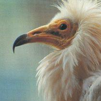 zoo-la-grandera-alimoche-picos-de-europa