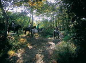 Rutas a Caballo en la Comarca de los Picos de Europa