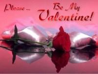 be my valentine roses
