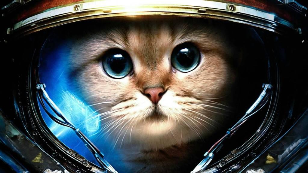 Cat As Astronaut 4K Wallpaper
