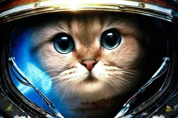 Cat As Astronaut 4K Wallpaper