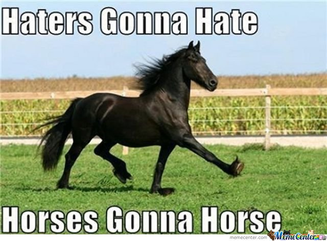 Horse Memes Haters gonna hate horses gonna horse
