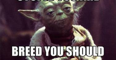 Stupid you are breed you should not Star War Meme