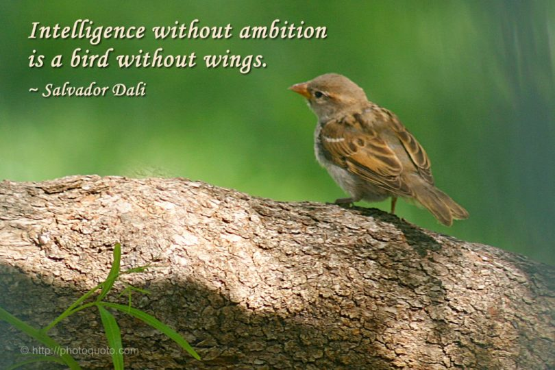Birds Quotes Images 04