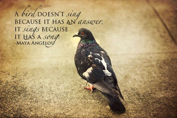 Birds Quotes Images 12