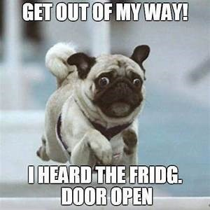 Pug Memes get out of my way