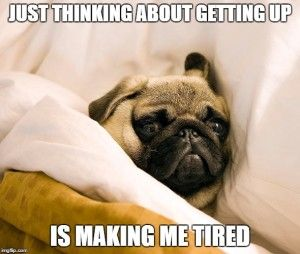 Pug Memes just thinking about getting up