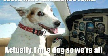 Dog Meme Funny