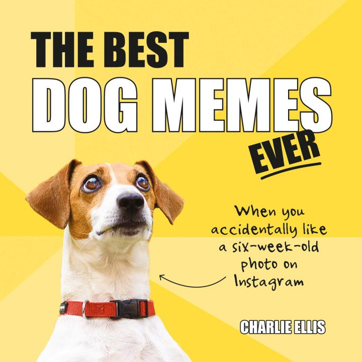 Dog Memes Images & Pictures Collection For Memes Lover 005