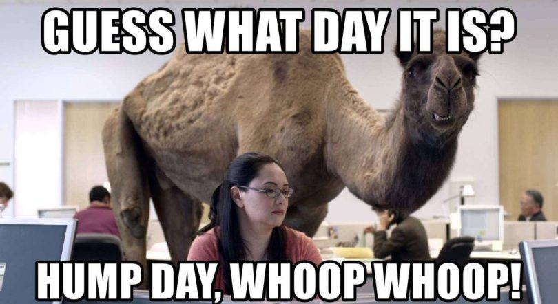 Amazing Hump Day Pictures guess what day it it hump day, whoop whoop