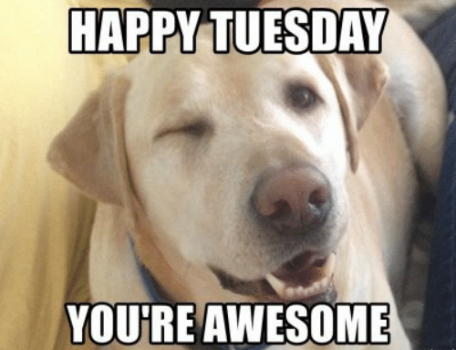 Happy Tuesday Youre Awesome