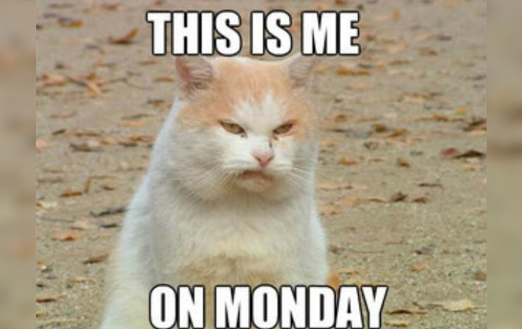 Impressive Monday Memes With A Cute Cat