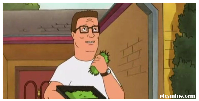 best hank hill quotes