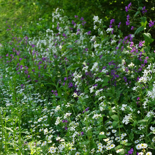 Woodland Edge Meadow