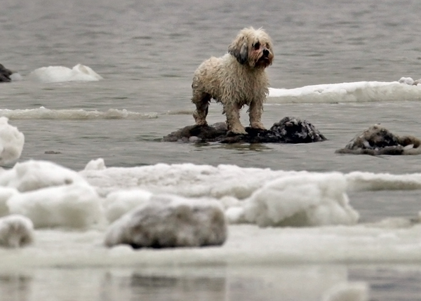 02/19/2015-Revere,MA. Lola, awaits Revere firefighters who rescued the dog along with anotherr dog, from out of an icy body of water near Oak Island St. Thursday afternoon, after the dogs fell through the ice and had to be rescued.