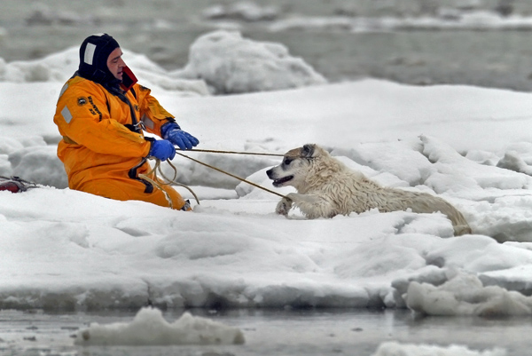 02/19/2015-Revere,MA. Revere firefighters rescue Thunder and Lola, from out of an icy body of water near Oak Island St. Thursday afternoon, after the dogs fell through the ice and had to be rescued.