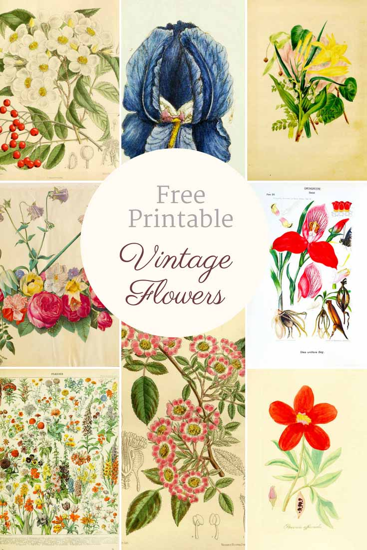 photograph regarding Free Printable Vintage Images called Eye-catching No cost Basic Flower Pics Towards Obtain - Think about