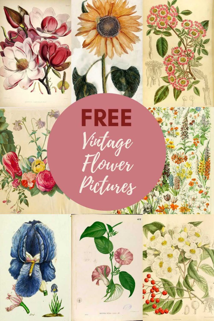 Free vintage flower pictures