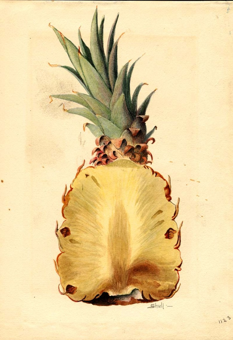 Pineapple watercolor
