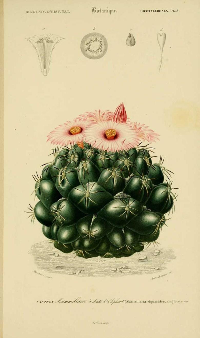 Dictionnaire universel d'histoire naturelle. v. 3 1849 - Atlas (Zoologie-