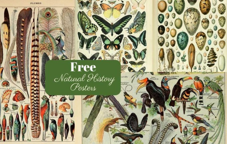 Free Printable Natural History Posters Of Adolphe Millot